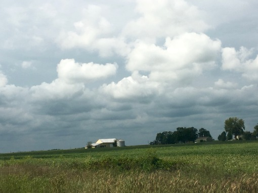in-farm-_1678